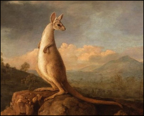 The Kongouro from New Holland, by George Stubbs