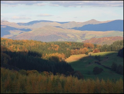 Photograph looking across Grizedale Forest location of the artist residency